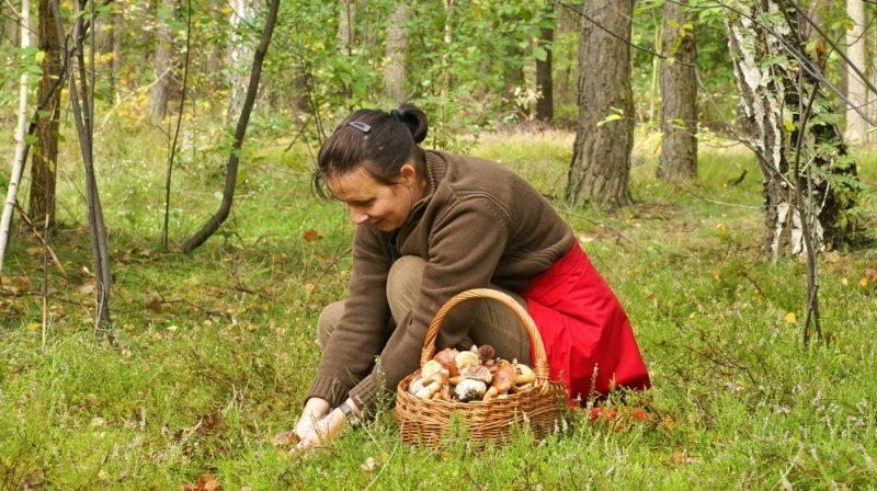 К чему снятся грибы женщине: собирать грибы, готовить грибы, есть грибы? Основные толкования - к чему снятся грибы женщине - Женское мнение