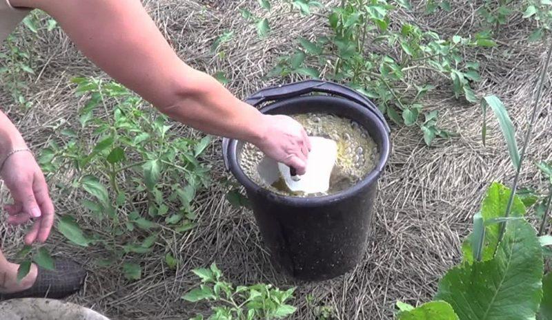 Борная кислота для растений: применение, как развести и поливать