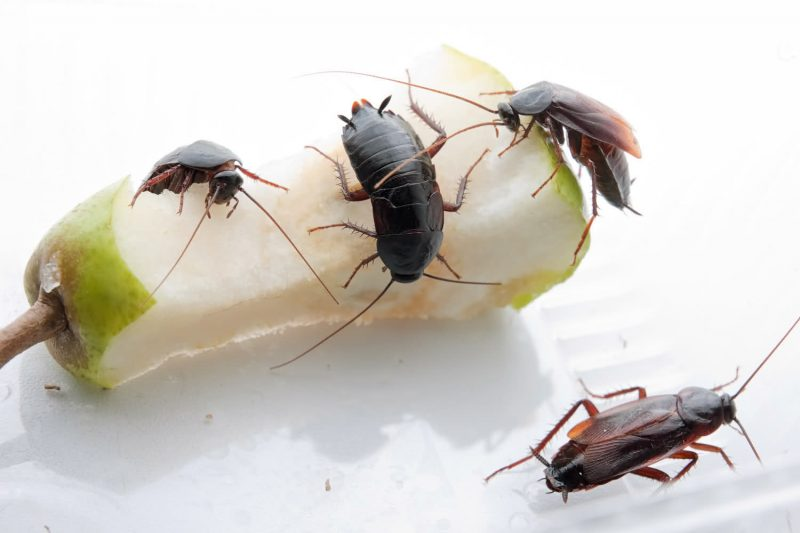 Сонник давить тараканов ногами