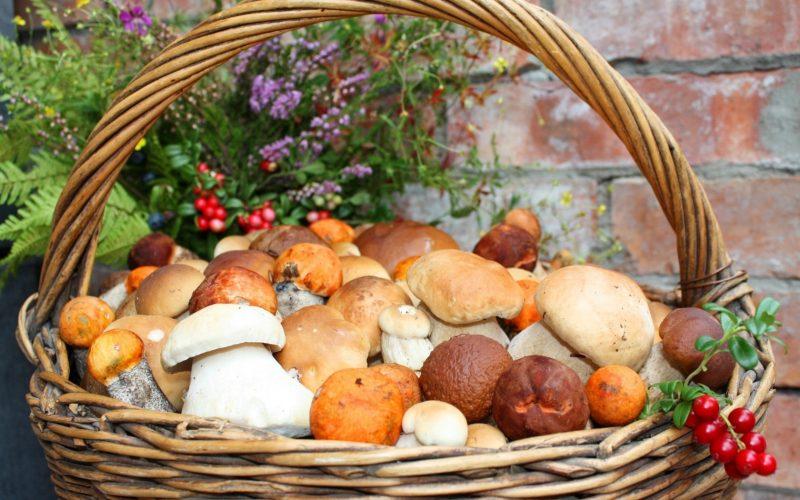 Сонник к чему снятся грибы собирать