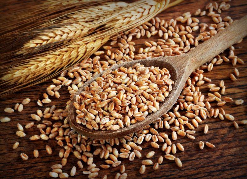 Полба - польза и вред для организма, свойства. Как готовить кашу и макароны