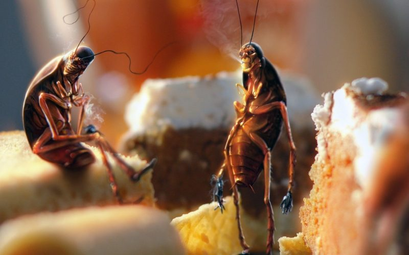 сонник толкование снов давить тараканов