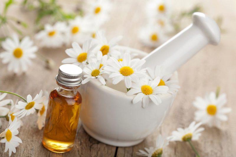 Ромашка аптечная полезные свойства и противопоказания лечебные свойства