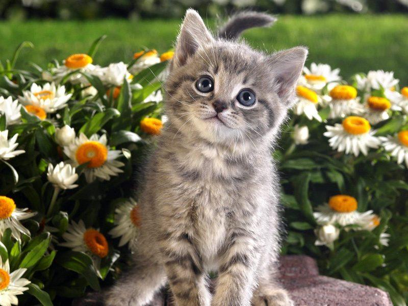 К чему снятся маленькие котята женщине? Сонник котята
