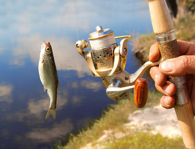 К чему снится разделывать рыбу для женщины и мужчины сонник