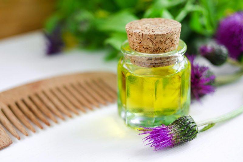Корень и листья лопуха — лечебные свойства и противопоказания. Что лечит лопух? Применение масел, отвара, настоек и сока лопуха в лечебных целях: рецепты