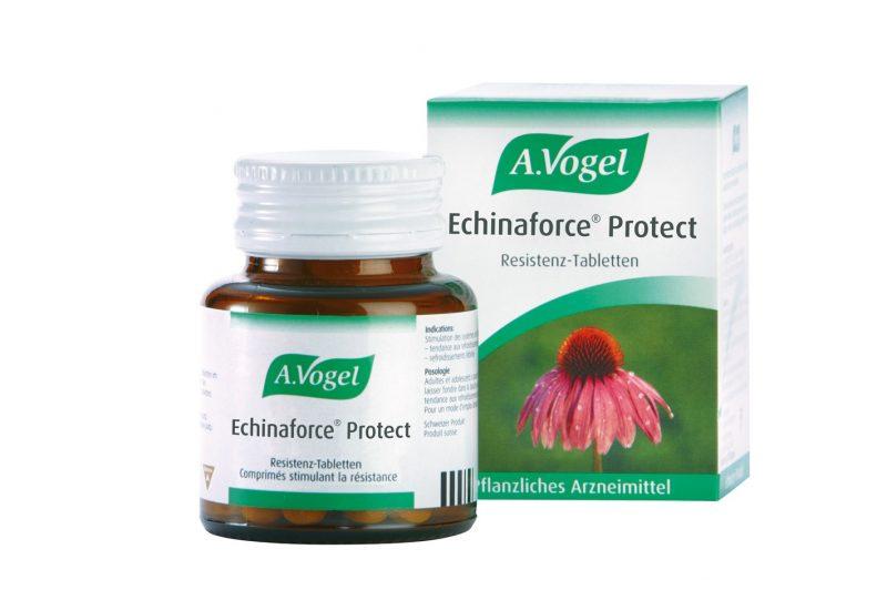 Эхинацея: лечебные свойства и противопоказания, инструкция по применению