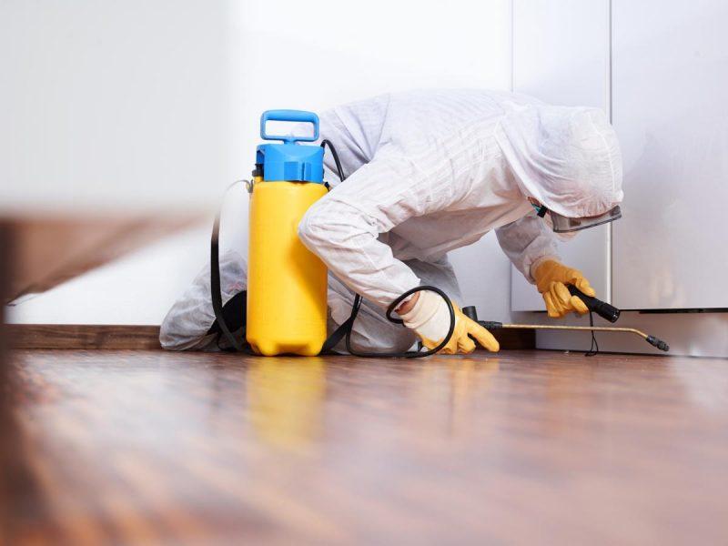 Как избавиться от домашних блох самостоятельно? Лучшие средства от блох в квартире и доме