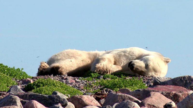 К чему снится медведь женщине? Сонник медведь