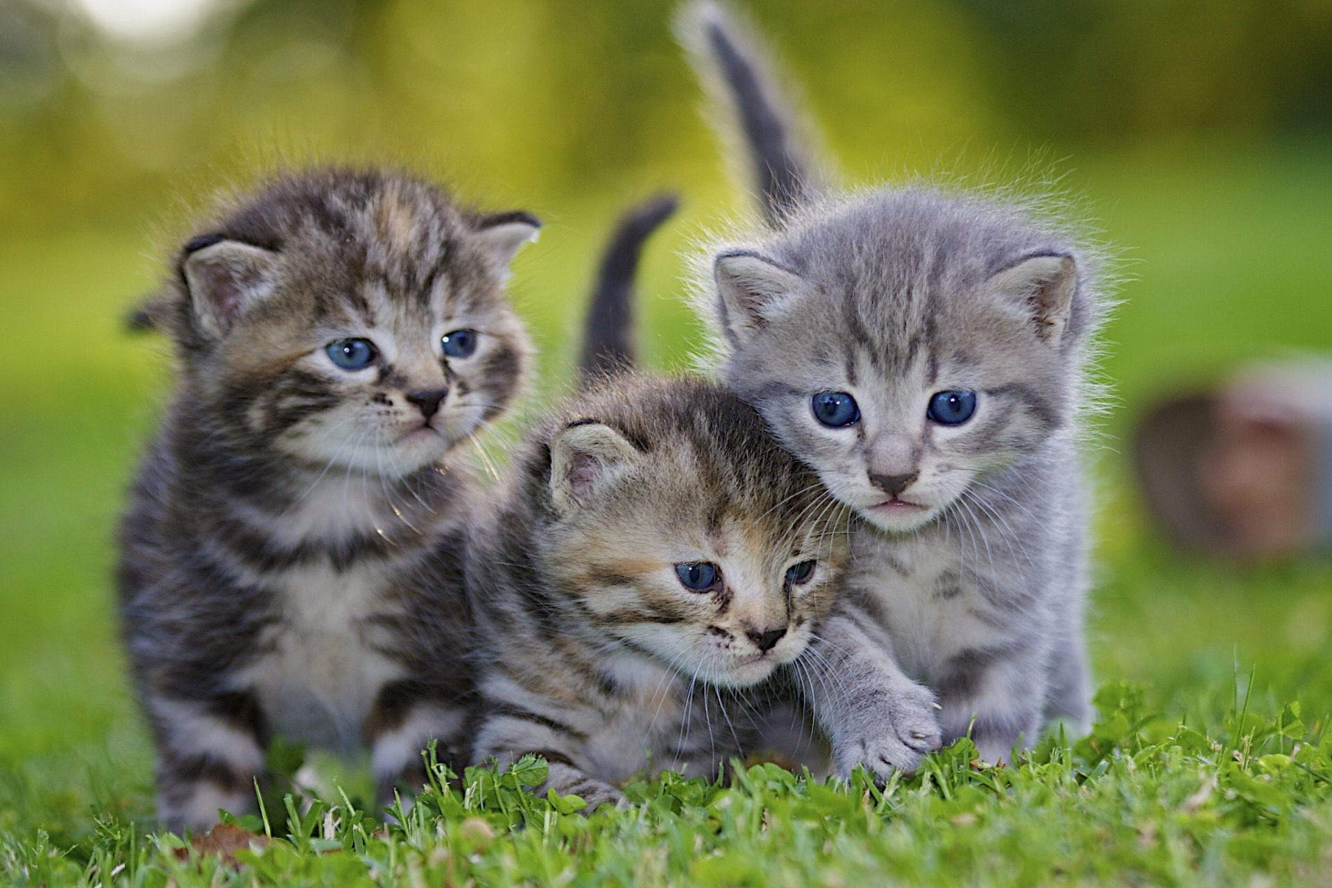 Сонник котята маленькие много разноцветные красивые