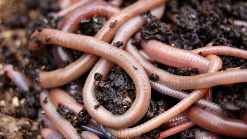 К чему снятся белые черви толкования сонника
