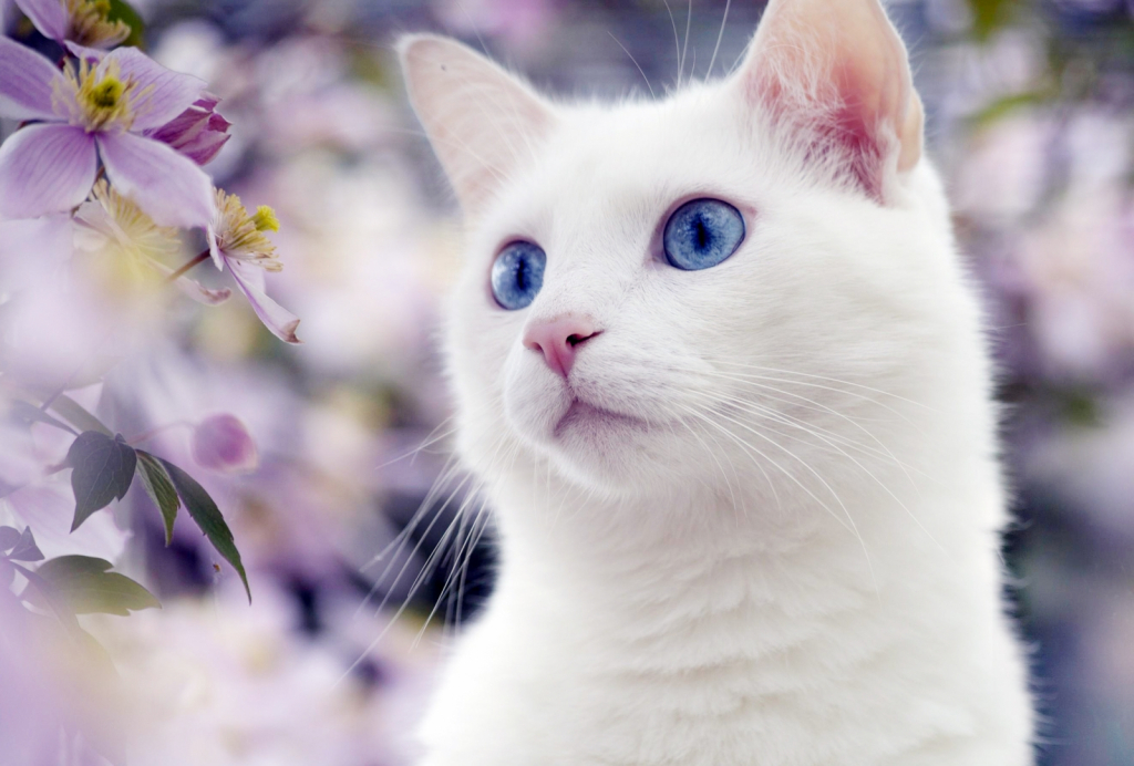 Сонник видеть белую кошку