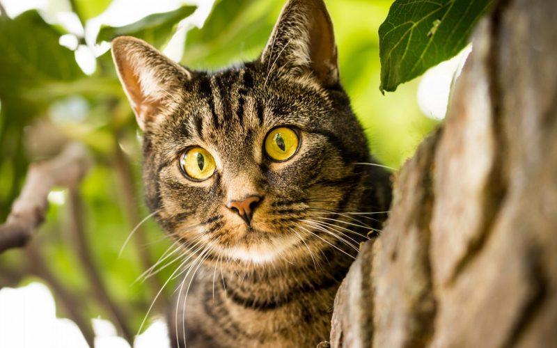 К чему снятся кошки толкование по сонникам