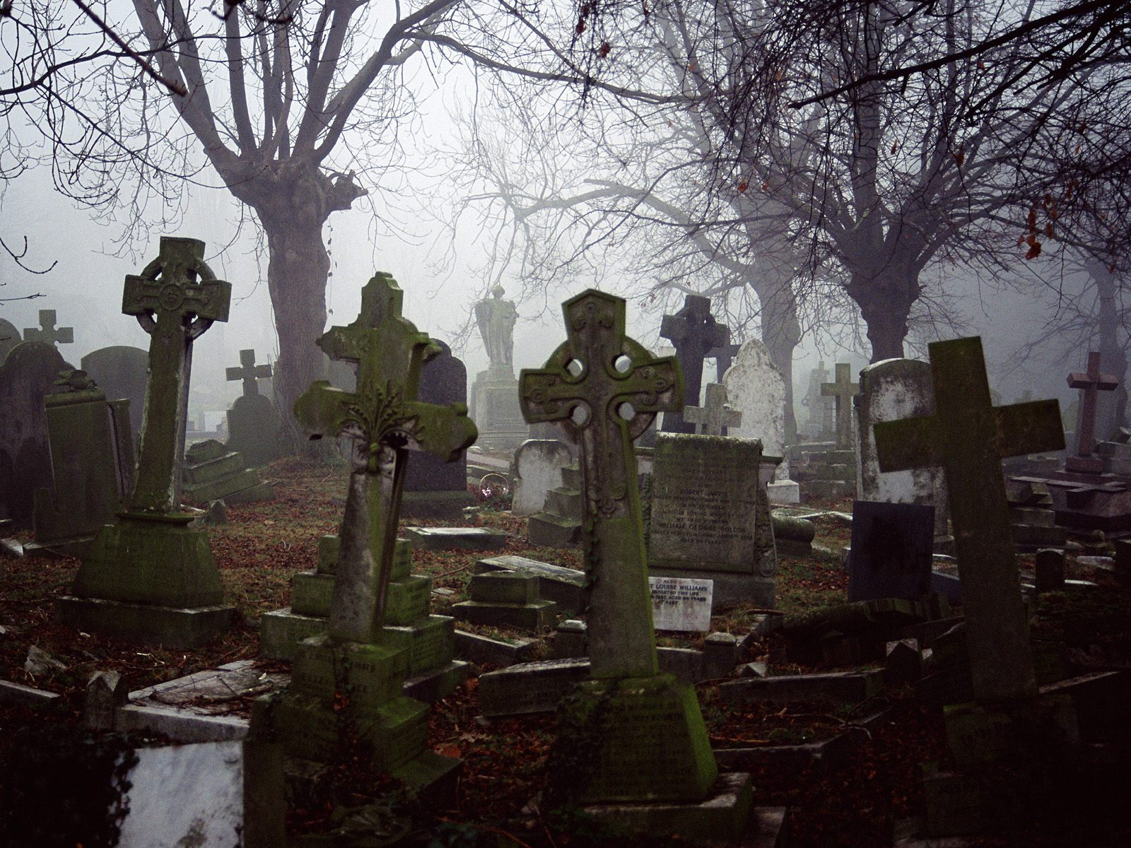 К чему снится кладбище для женщины? Сонник про кладбище