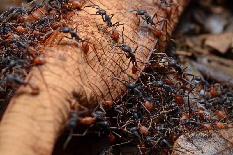 К чему снятся муравьи во сне женщине? Сонник муравьи