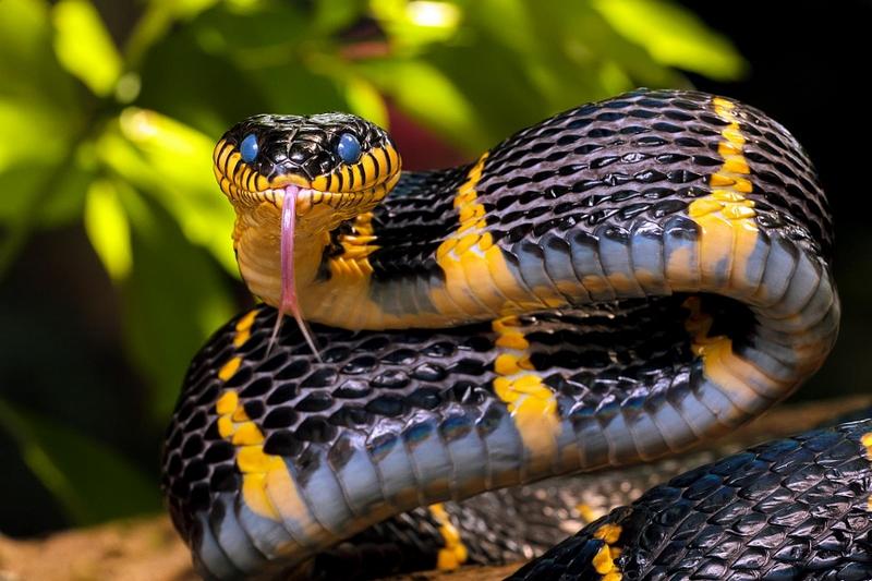 Сонник: К чему снятся змеи (укусила)