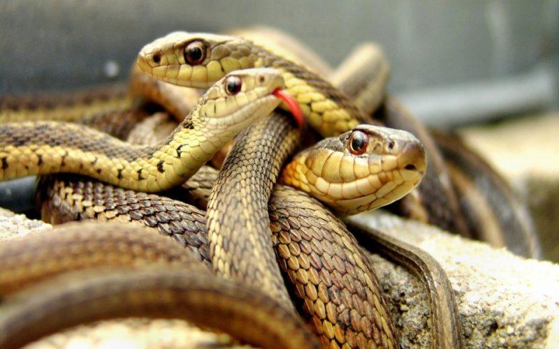 Сонник есть змей