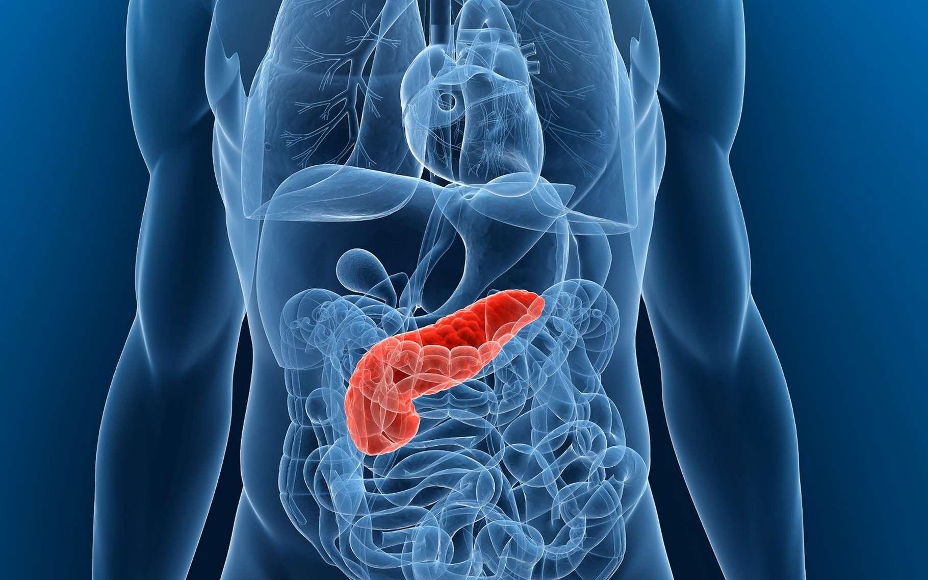 Как болит и где болит поджелудочная железа у человека ?