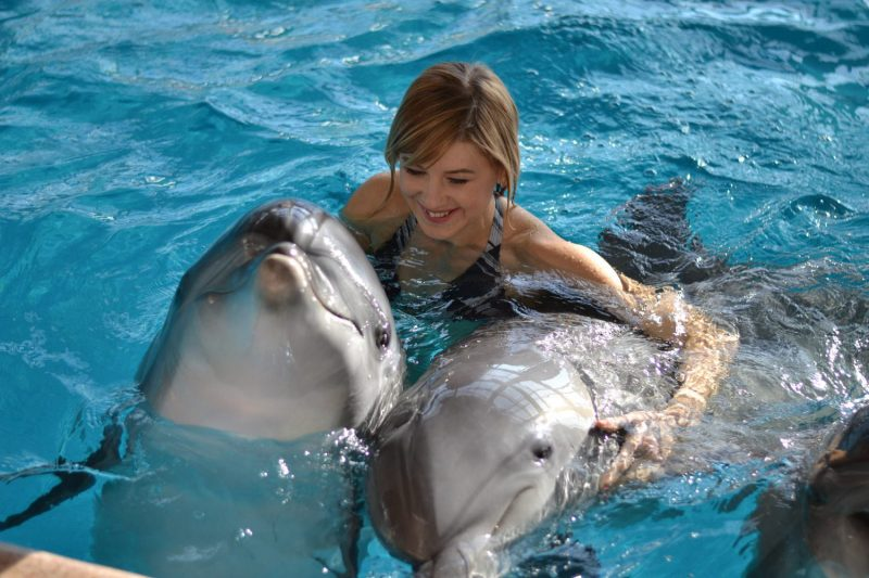 Сонник дельфин в воде гладить
