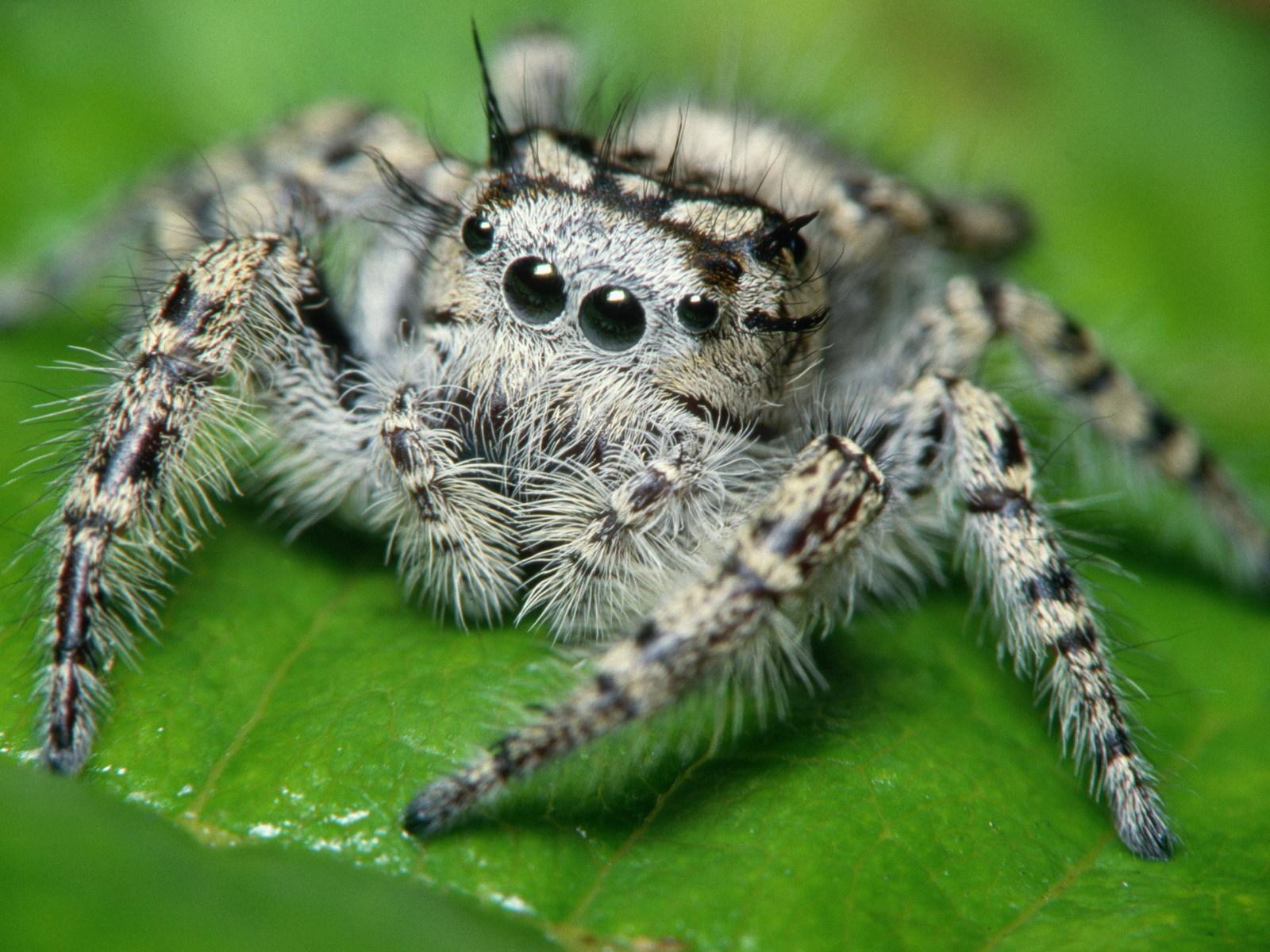 Сонник Большие пауки к чему снятся Большие пауки во сне видеть