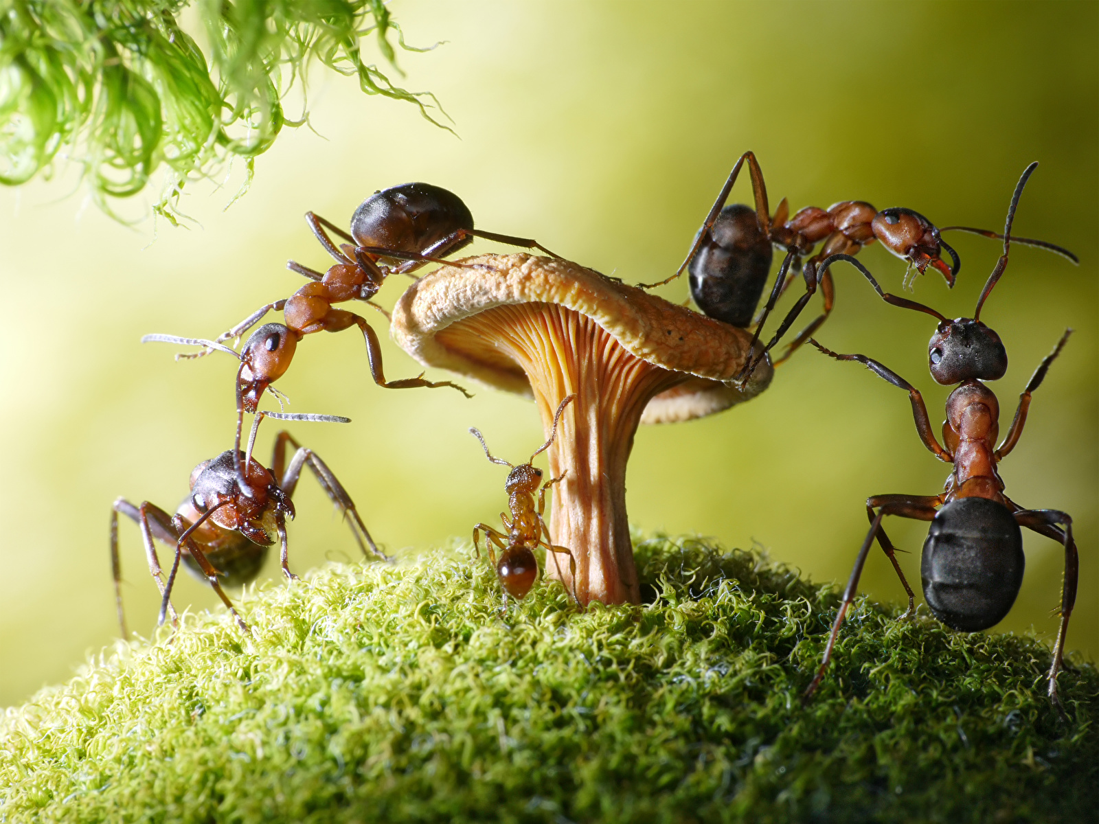 Сонник к чему снятся муравьи на кровати