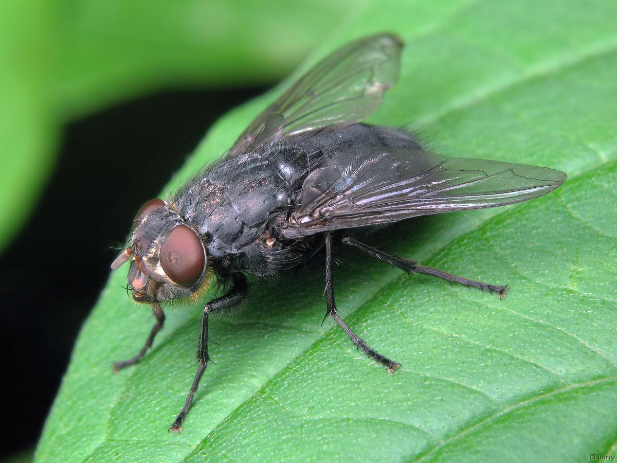 К чему снятся мухи во сне женщине — сонник мухи