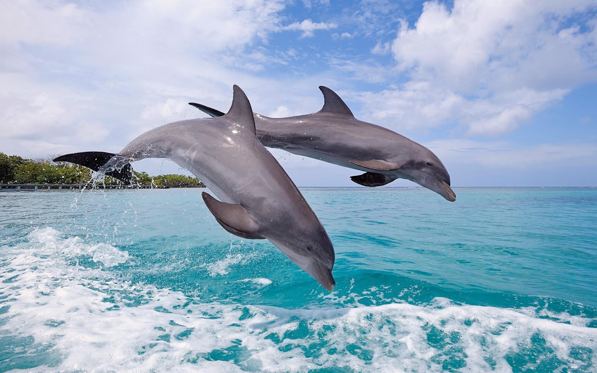 Сонник толкование к чему снятся дельфины