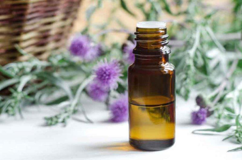 Расторопша: полезные свойства и противопоказания применения масла