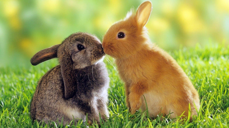 Сонник к чему снятся кролики много кроликов