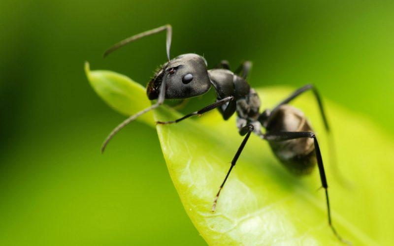 Сонник миллера укус муравья