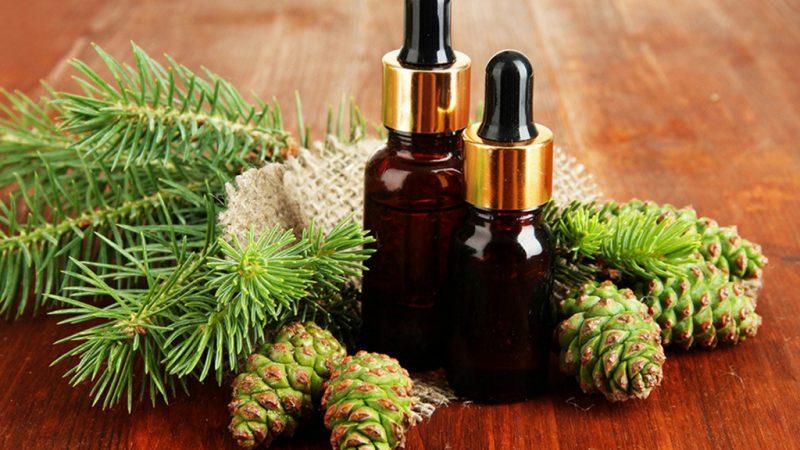 Пихтовое масло: лечебные полезные свойства и противопоказания