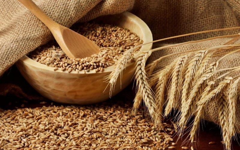 Пророщенная пшеница ― польза и вред, как проращивать и употреблять в домашних условиях?
