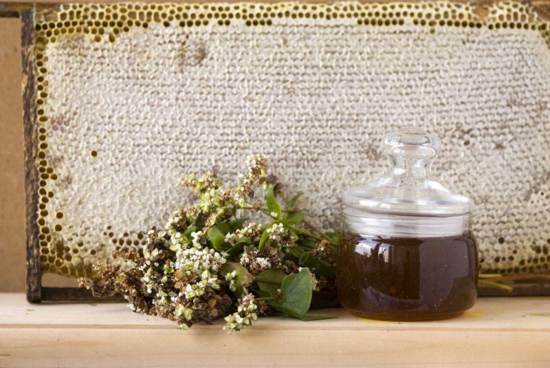 Польза и вред гречишного меда