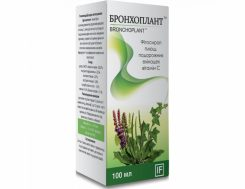 Тимьян: лечебные полезные свойства и противопоказания