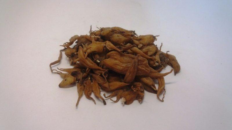 Ятрышник: полезные лечебные свойства и противопоказания, применение в народной медицине