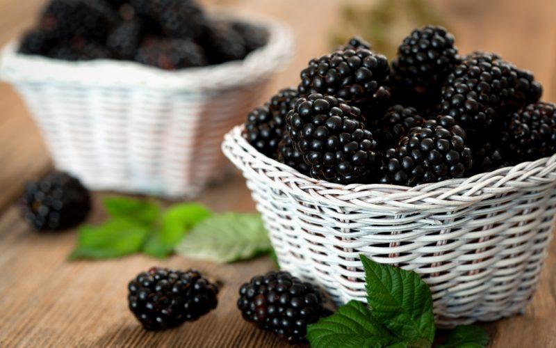 Ежевика: польза и вред для здоровья, полезные свойства и противопоказания