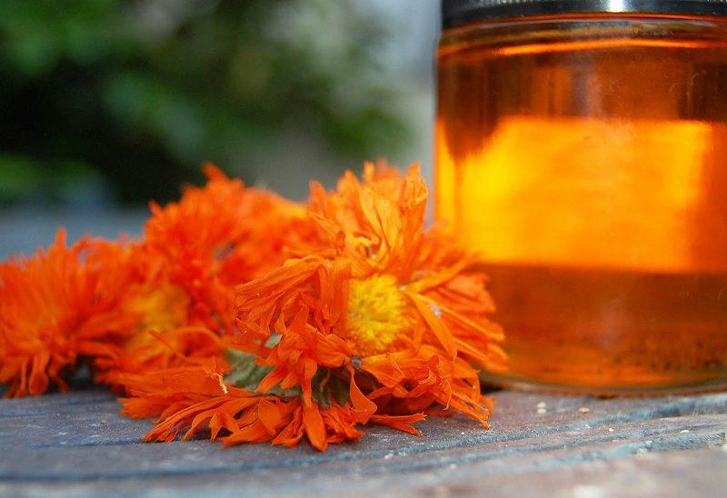 Календула: лечебные полезные свойства и противопоказания для женщин