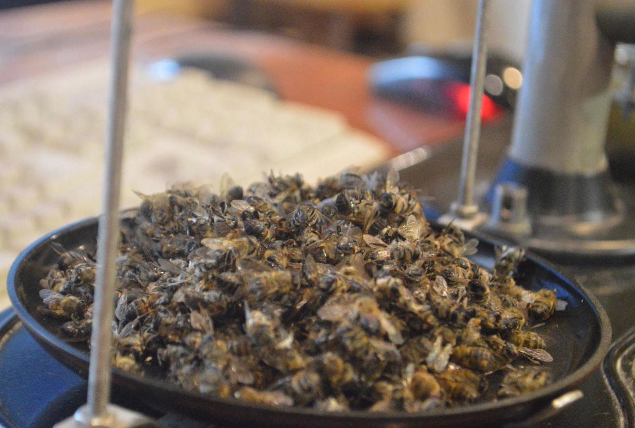 Пчелиный Подмор Лечение Для Похудения. Рецепты похудения с помощью пчелиного подмора