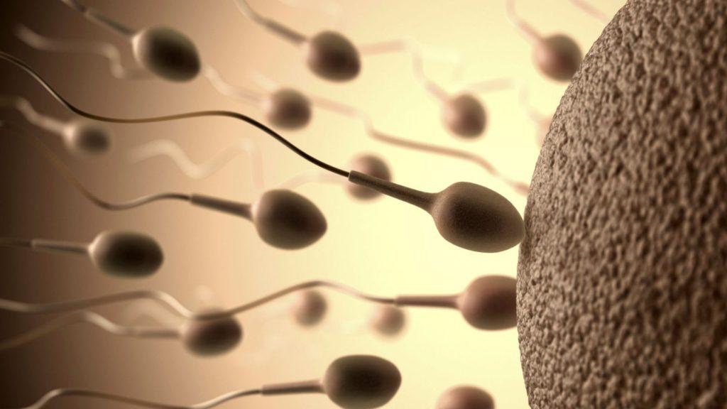 как увеличить количество спермы