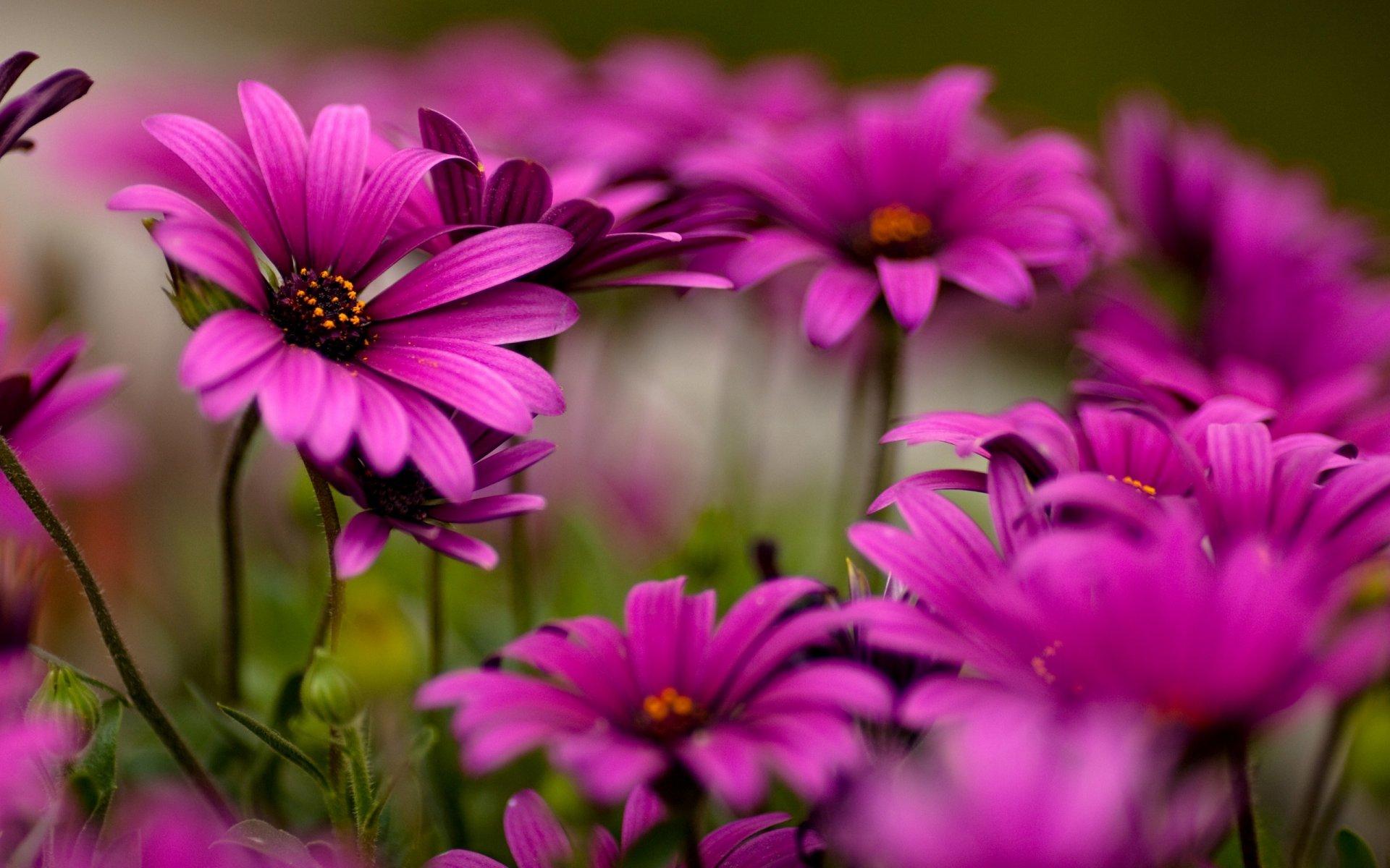 Сонник много цветов во сне к чему снится много цветов