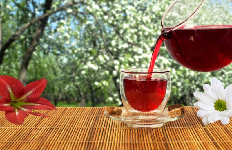 Лимонник китайский: лечебные полезные свойства и противопоказания