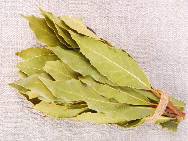 Лавровый лист: лечебные полезные свойства и противопоказания