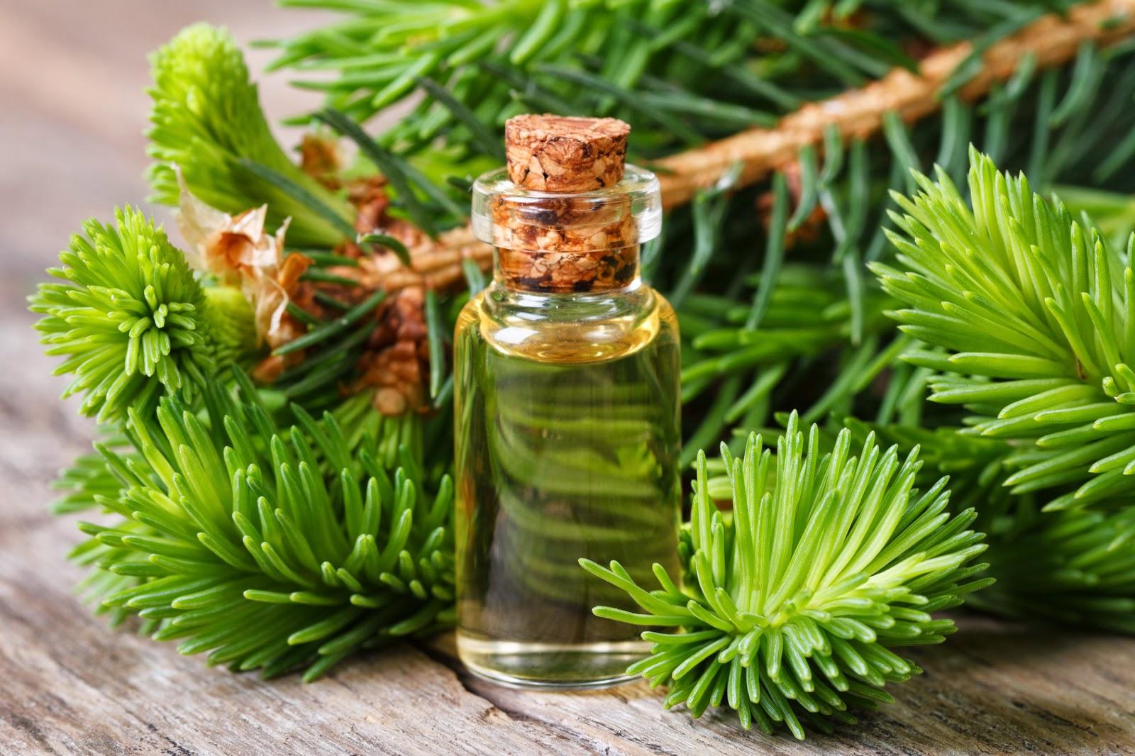 Целебные свойства пихтового масла