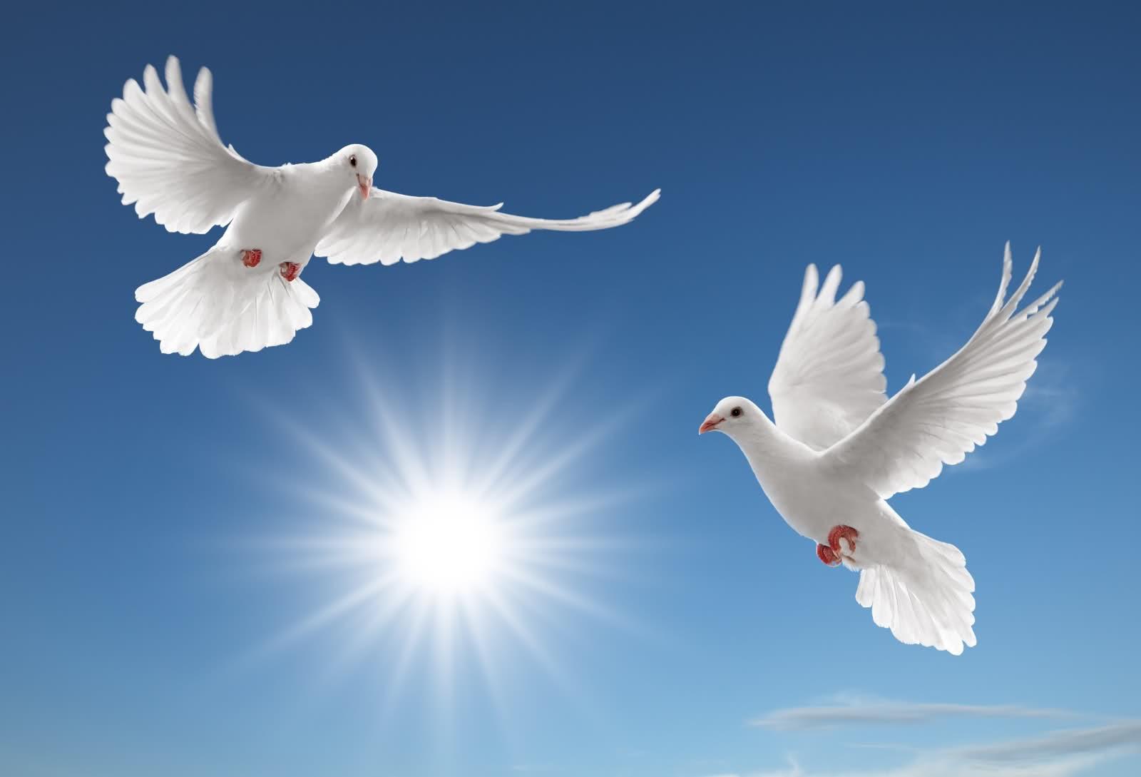 К чему снятся голуби во сне женщине? Сонник голуби