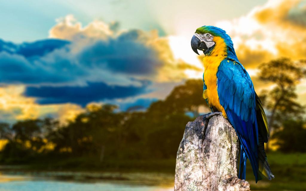 Сонник голова попугая