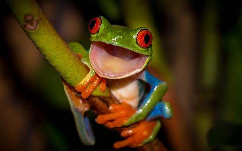 Сонник лягушка большая зеленая в доме