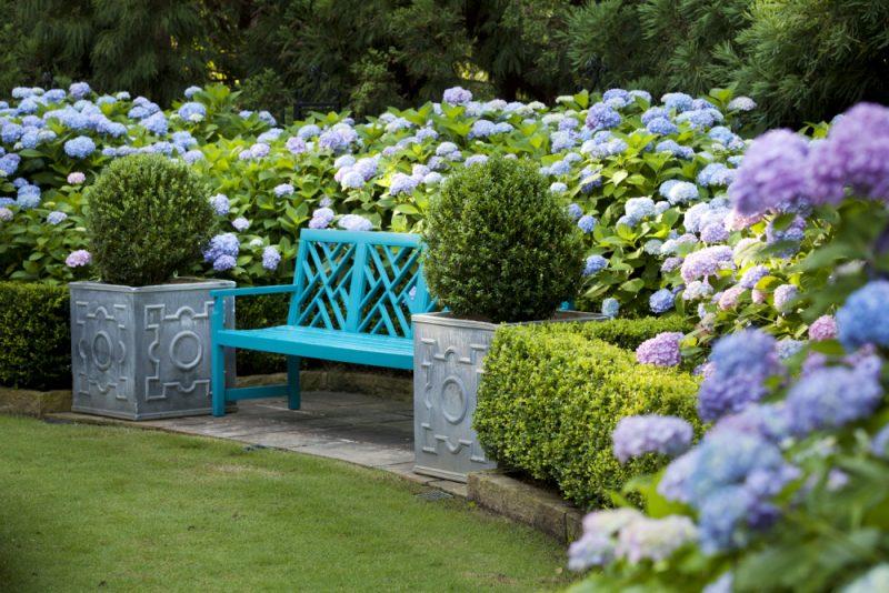 Гортензия садовая: посадка и уход, выращивание в открытом грунте, полив и размножение