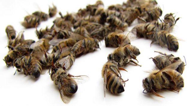 Подмор пчелиный: лечебные свойства для женщин, как принимать для суставов?
