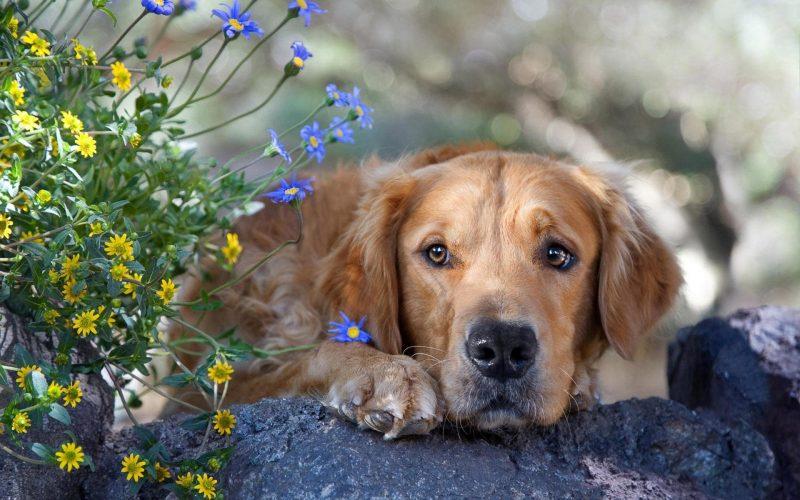 Почему снится белая собака: толкование по популярным сонникам