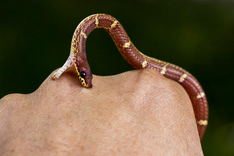 сонник укусила змея за руку без крови